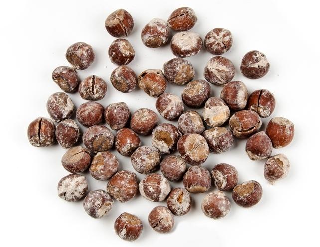 Buy Жареный соленый фундук со скорлупой размере (17-19mm 19-21mm, 21, + мм . Roasted and Salted Inshell Hazelnuts