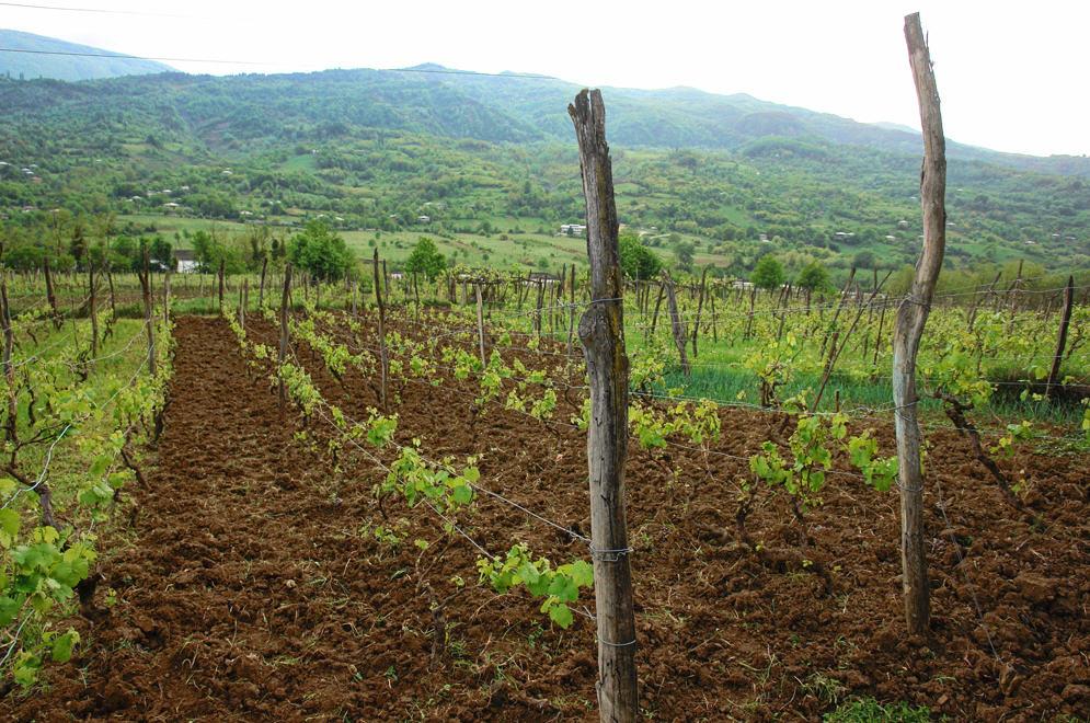 Buy Хванчкара – наименованное по место происхождению, контролированное природно-полусладкое красное вино. Алкоголь . 12% , 750 мл., сахар 42 гр/дм3.
