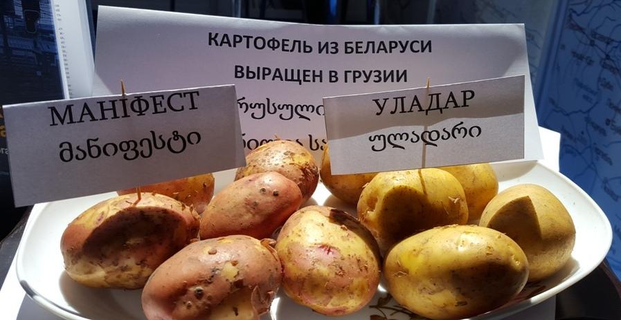 Buy Картофель
