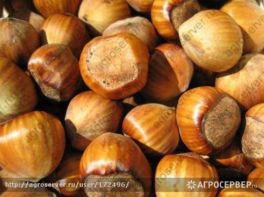 Buy Ядра лесного ореха