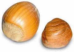 Фундук. Oregon State Nut