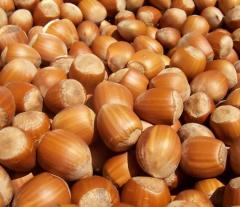 Georgian Hazelnut in Shell