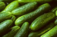 Georgian Cucumber