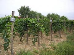 Вино Beverange