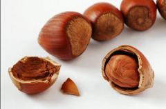 Georgian Hazelnut. Грузинский фундук.