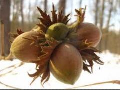 Product of Georgian Nut. продукция - орехи