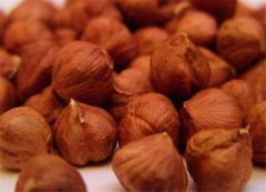 Фундук. Лесные орехи чищеные без скорлупы.