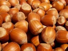 Фундук Круглый в скорлупе. Round Hazelnut In shell