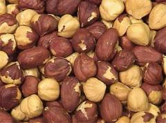 Масло лесного ореха . Raw Material for Hazelnut