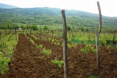 Хванчкара – наименованное по место происхождению, контролированное природно-полусладкое красное вино. Алкоголь . 12% , 750 мл., сахар 42 гр/дм3.