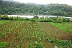 Хванчкара - природно-полусладкое красное вино. Алкоголь . 12% , 750 мл., сахар 42 гр/дм3.