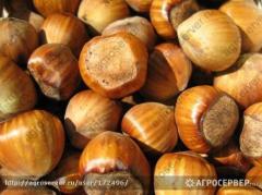 Ядра лесного ореха