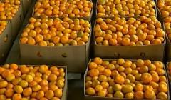 Свежие мандарины из Грузии