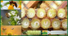 Грузинское  пчелыное молочка