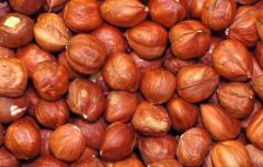 Грузинский лесной орех