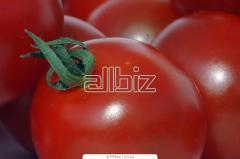 Tomato seeds packed