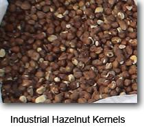 Hazelnut (industrial)