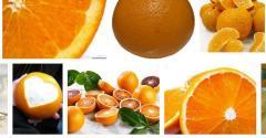 Цитрусовые - Апельсин. Citrus - Orange