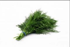 Herbia Dill . Укроп свежий.