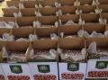 Hazelnut price in Georgia