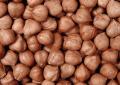 Ядра ореха фундука