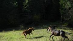 Horse riding tour in Borjom-Kharagauli park