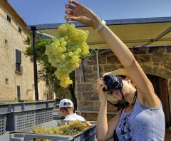 Wine Gourmet Tours