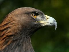 Bird-Watching Tour To Georgia