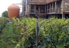 Wine Tour Tbilisi Mtskheta